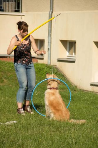 Bunter Hund-6575